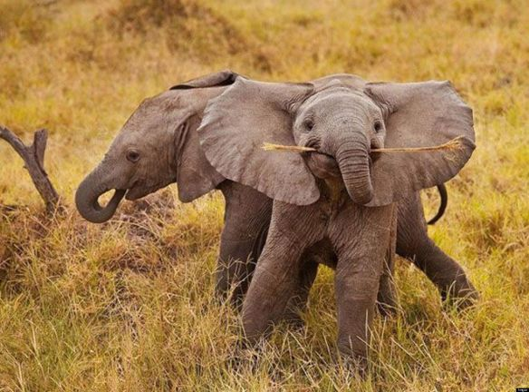 o-SMILING-BABY-ELEPHANT-facebook