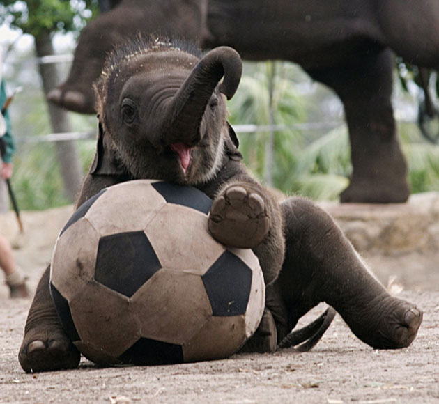 Baby Elephants Cute Baby Elephants | Jodi ...