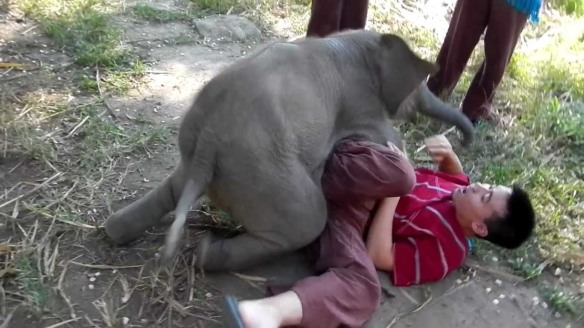 cuddlyelephant