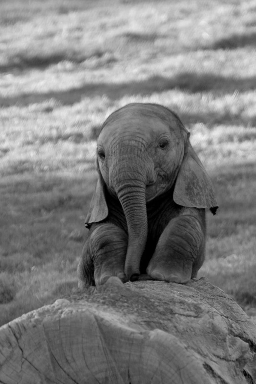 Baby Elephant  Jodi L Milner, Author
