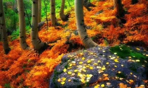forest-autumn-fall-trees-stone-colors-leaves-beautiful-wallpapers-hd-1280x768.jpg