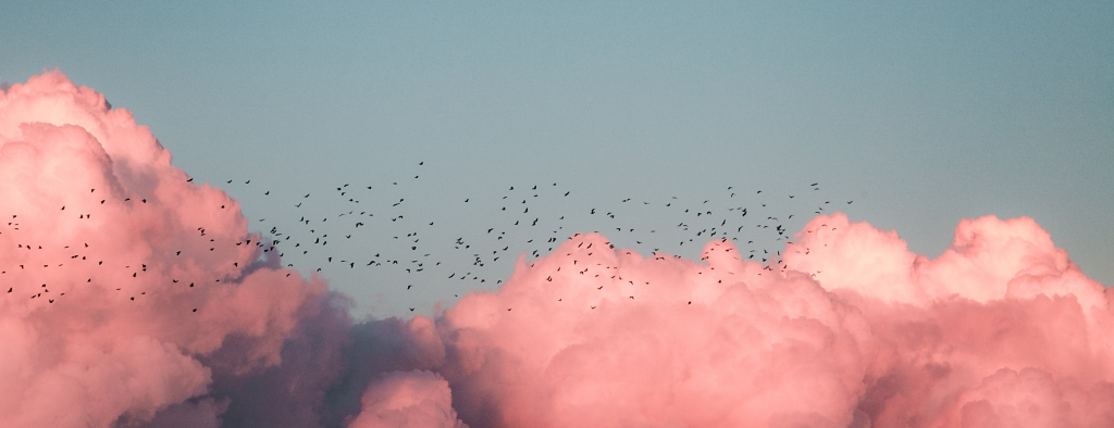 A flock of birds flying through clouds resembling pink cotton candy. Super inspiring.
